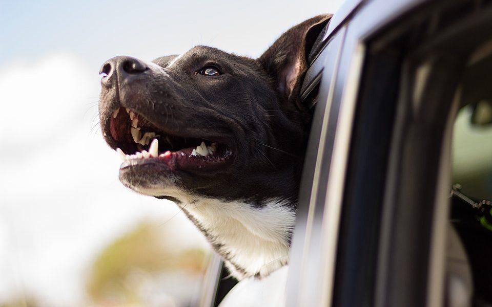 Prevoz psa