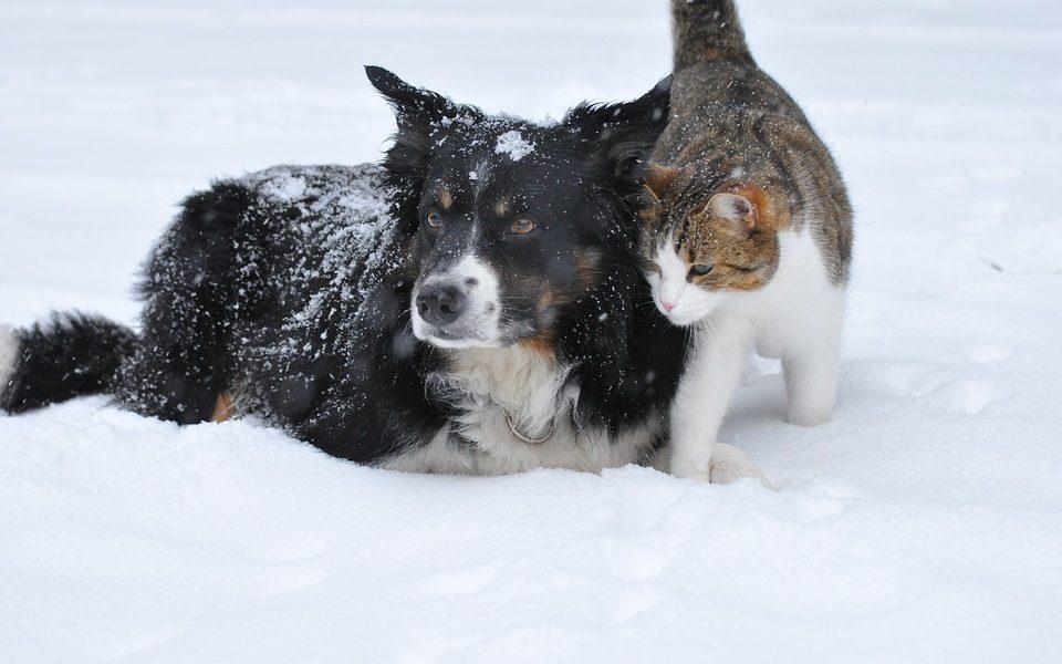 macka-pes