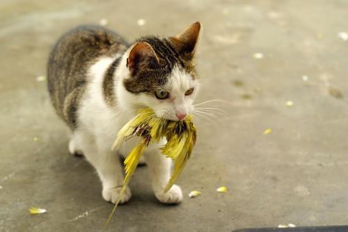 kako mački preprečiti napad na ptice