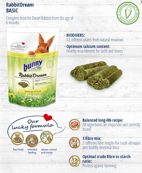Bunny Nature Rabbit Dream Basic