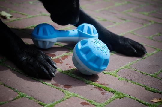 Hladilna igrača za psa