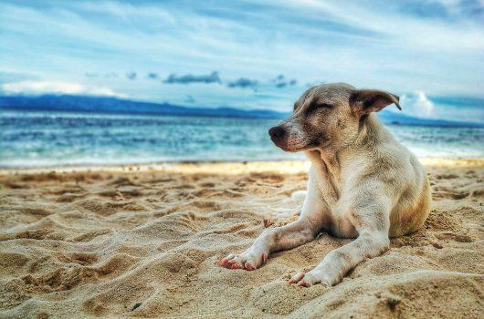 Psi, poletje in vročinski stres