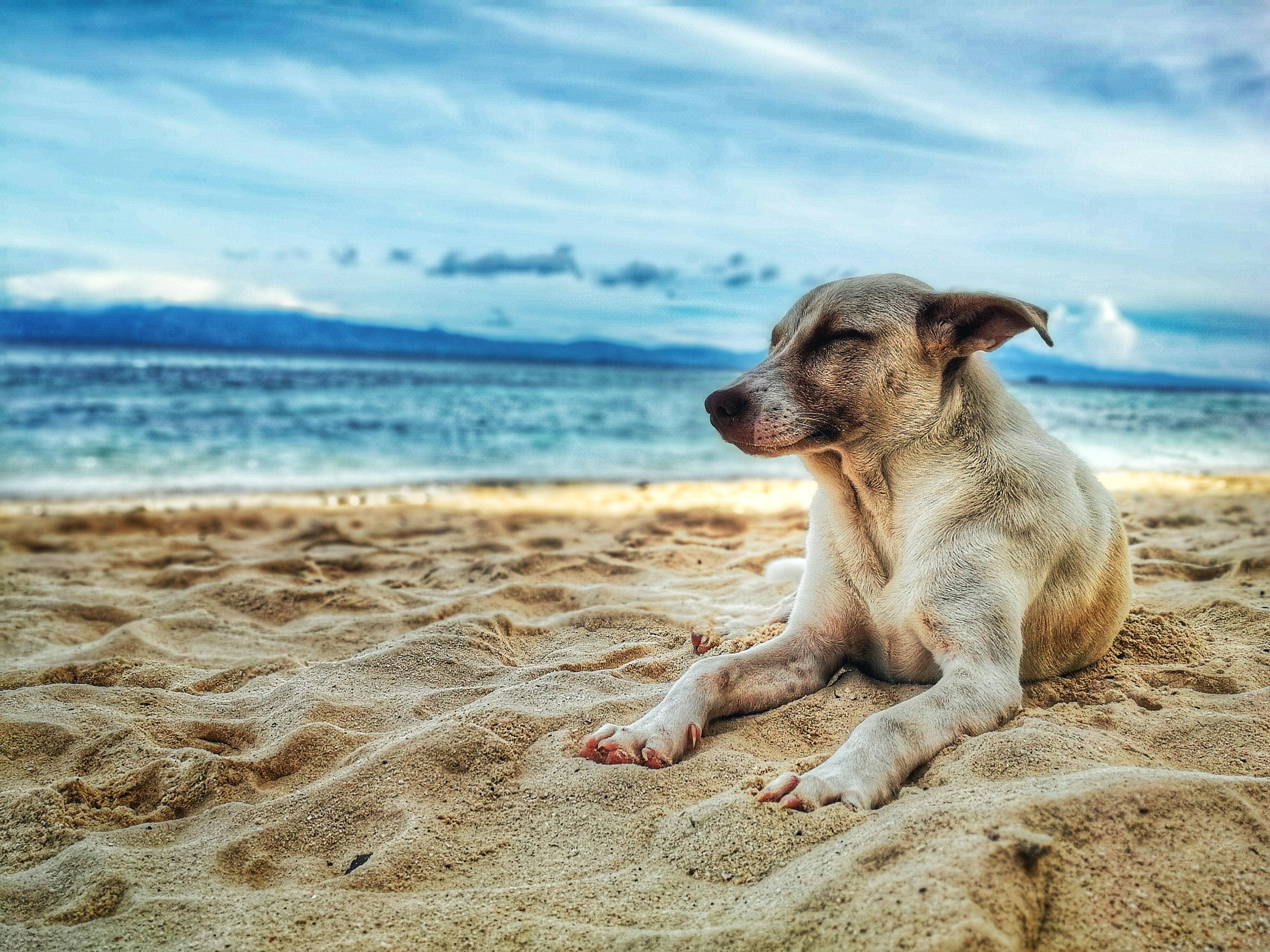 Psi, poletje, vročinski stres
