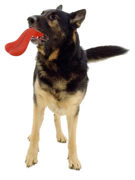 Pawise Funny Face pasja igrača dolg jezik