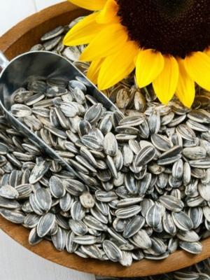Hrana za zunanje ptice - sončnice 25kg