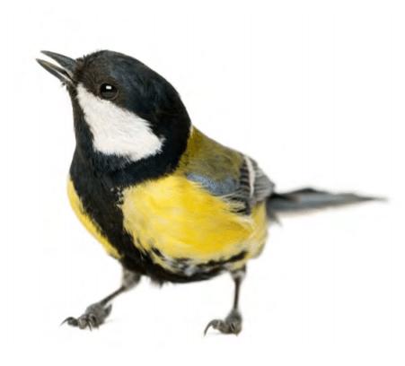Ptice v naravi